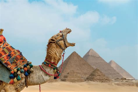 Tips For Visiting the Giza Plateau and Great Pyramids