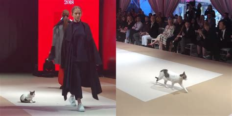 A cat just walked the catwalk in Turkey - and it's