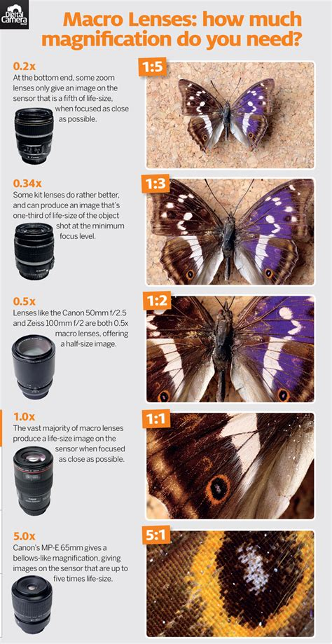 Cheat Sheet: Macro Lenses - How Much Magnification Do You