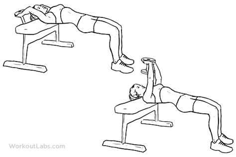 Dumbbell Pullover | Illustrated Exercise guide - WorkoutLabs